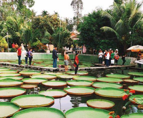 Cẩm nang du lịch Đồng Tháp: Vùng đất sen đẹp nhất cả nước